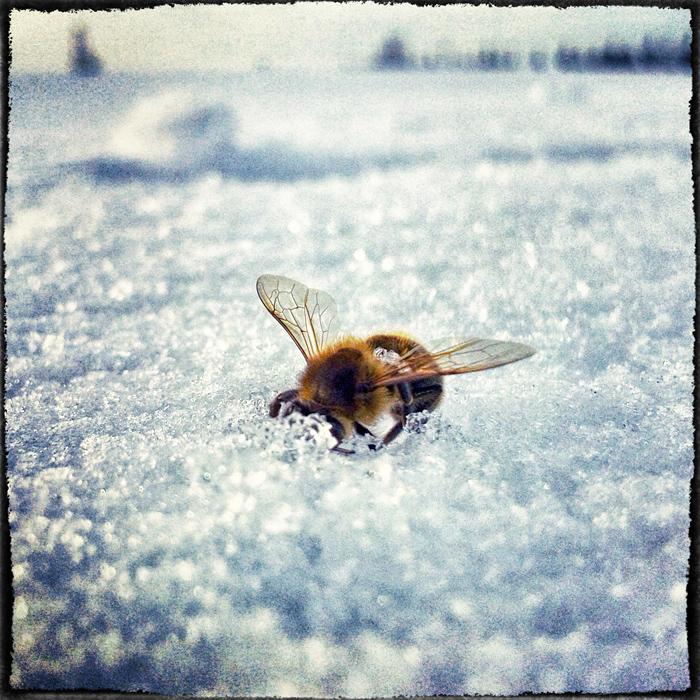 Jeśli zginie flora i fauna, musi zginać i człowiek
