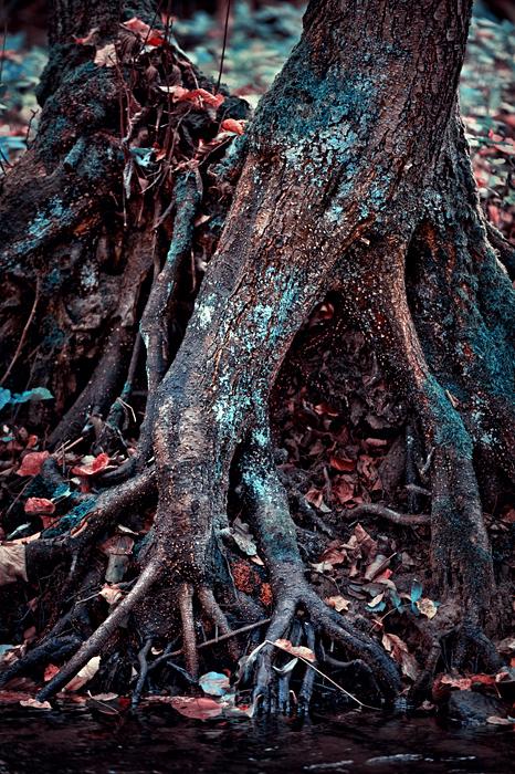 Natura - wrota do Istnienia