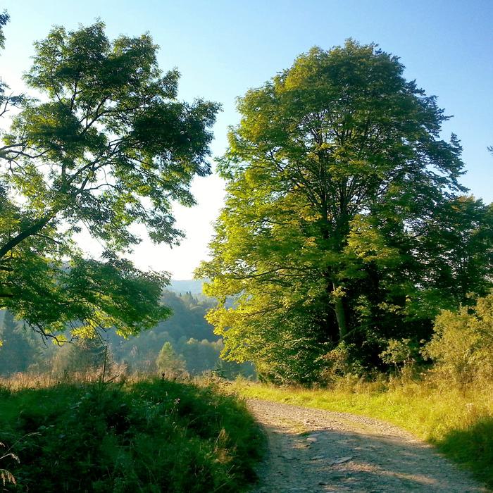 Droga do magicznej doliny