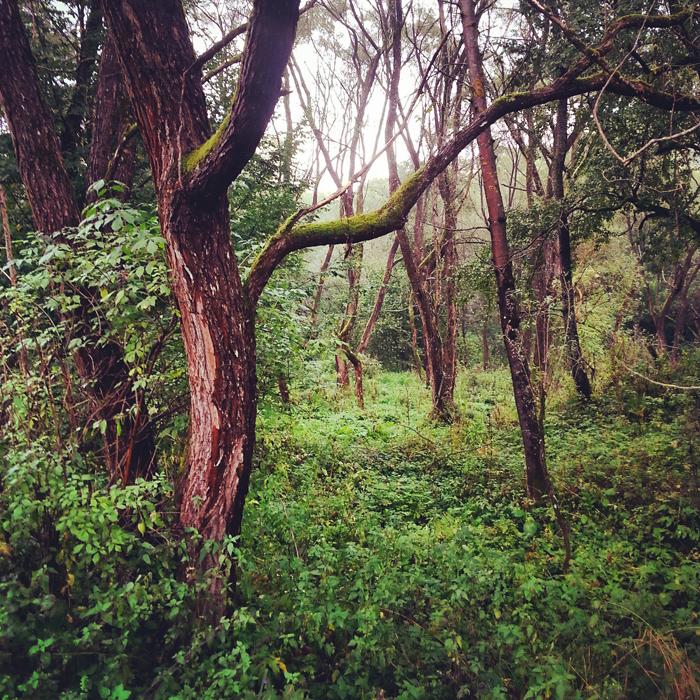 Smutny las w dolinie