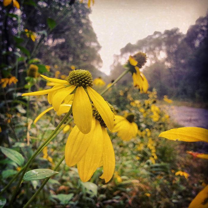 Zapomniana droga i dzikie-ogrodowe kwiaty