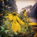 Forgotten road and wild-garden flowers
