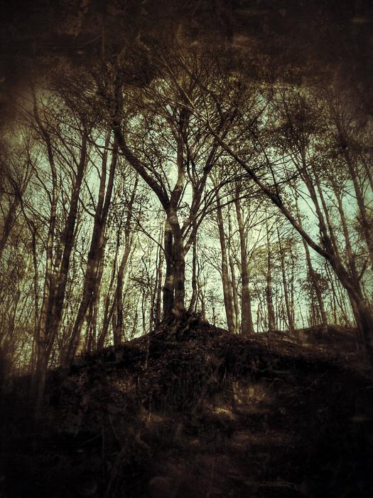 Szukając Drzewa Świata