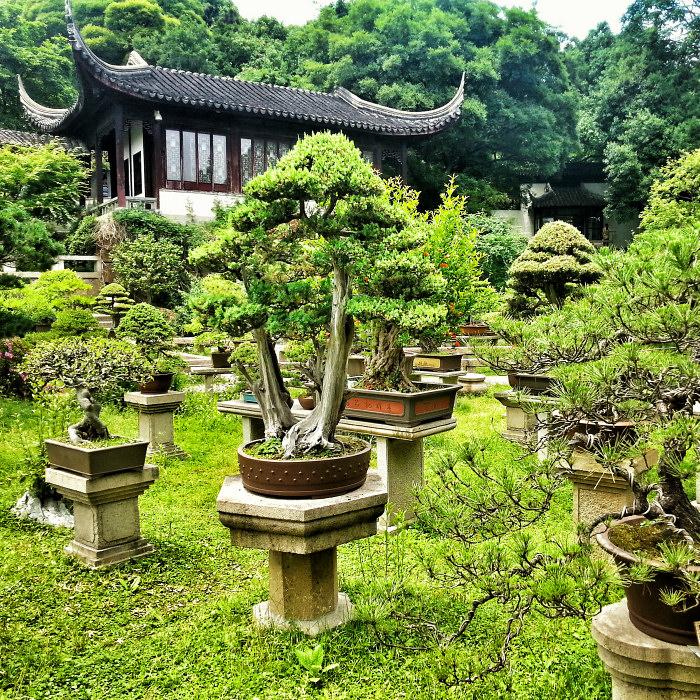 Ogród Bonsai